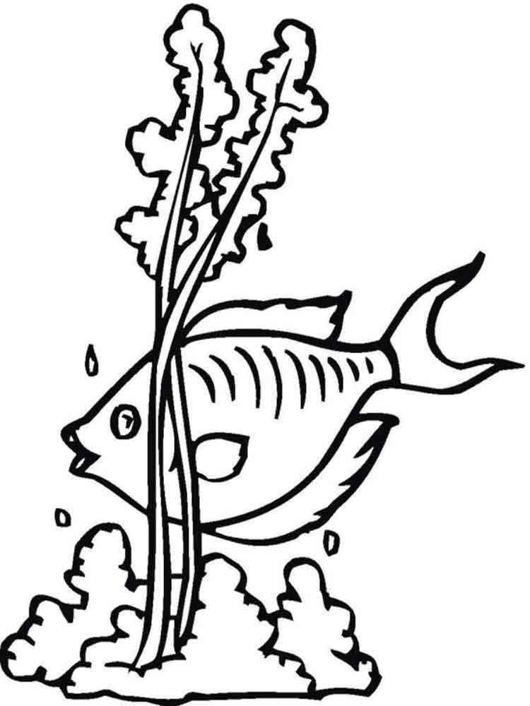 Картинки морских водорослей раскраска