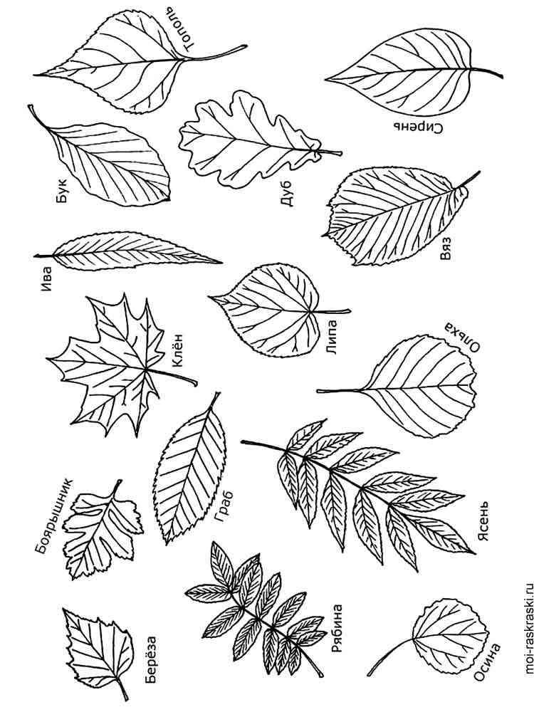 Листья деревьев картинки нарисованные