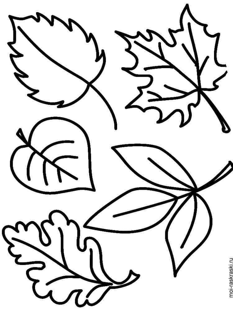 любит картинки для рисования листья деревьев идет трагических