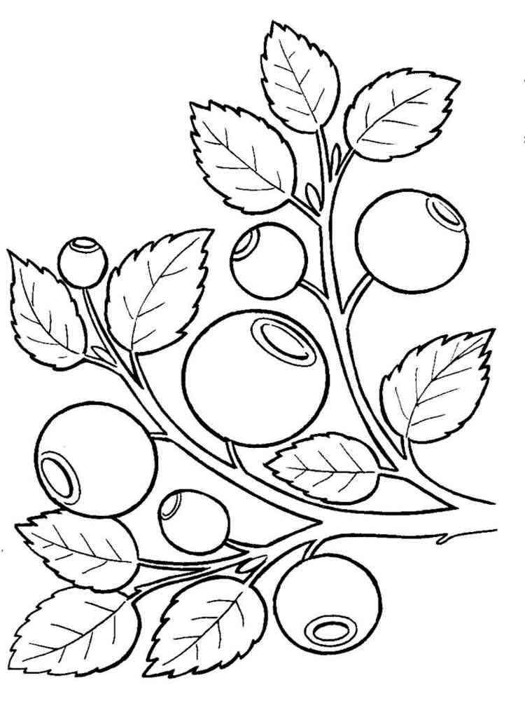 Раскраска Черника - распечатать в формате А4