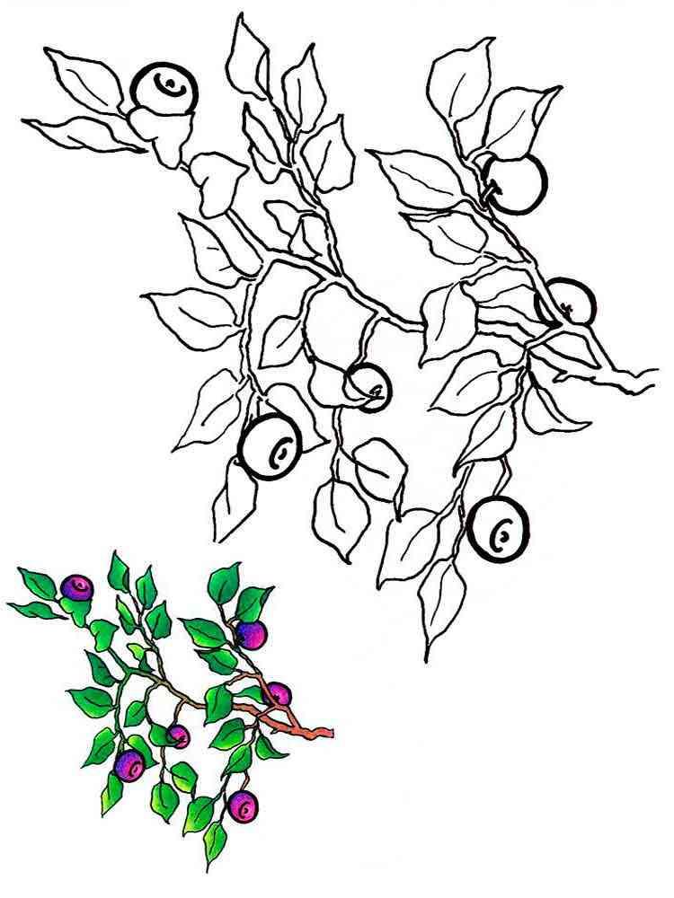 раскраска черника скачать и распечатать раскраски ягода черника