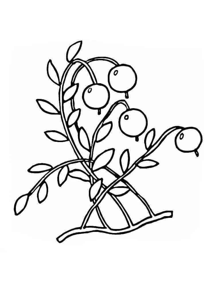 Раскраска Клюква - распечатать в формате А4