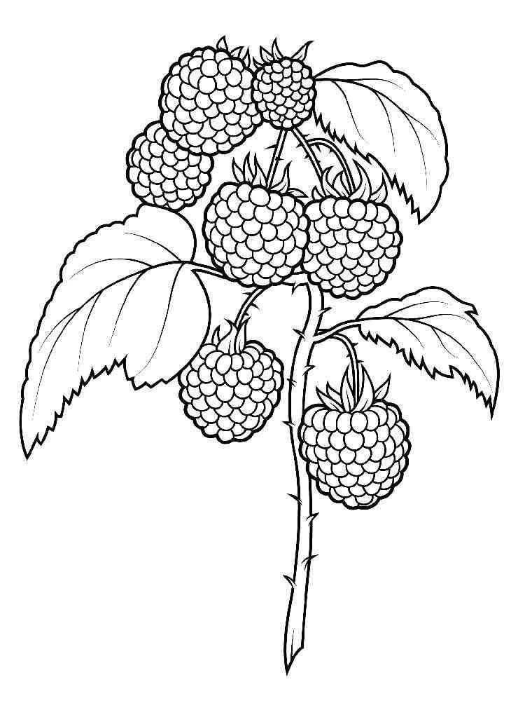 Картинки как нарисовать ягода