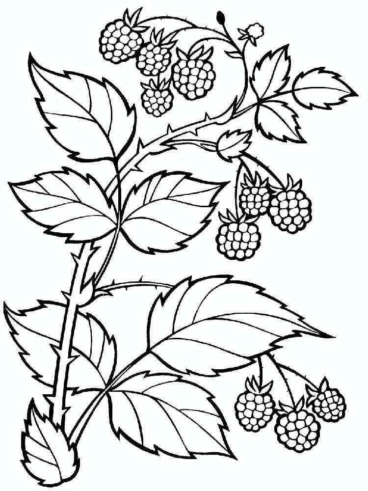 Раскраски малин