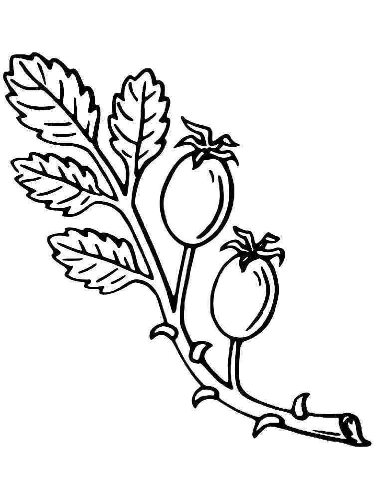 Рисунки кустов и цветов