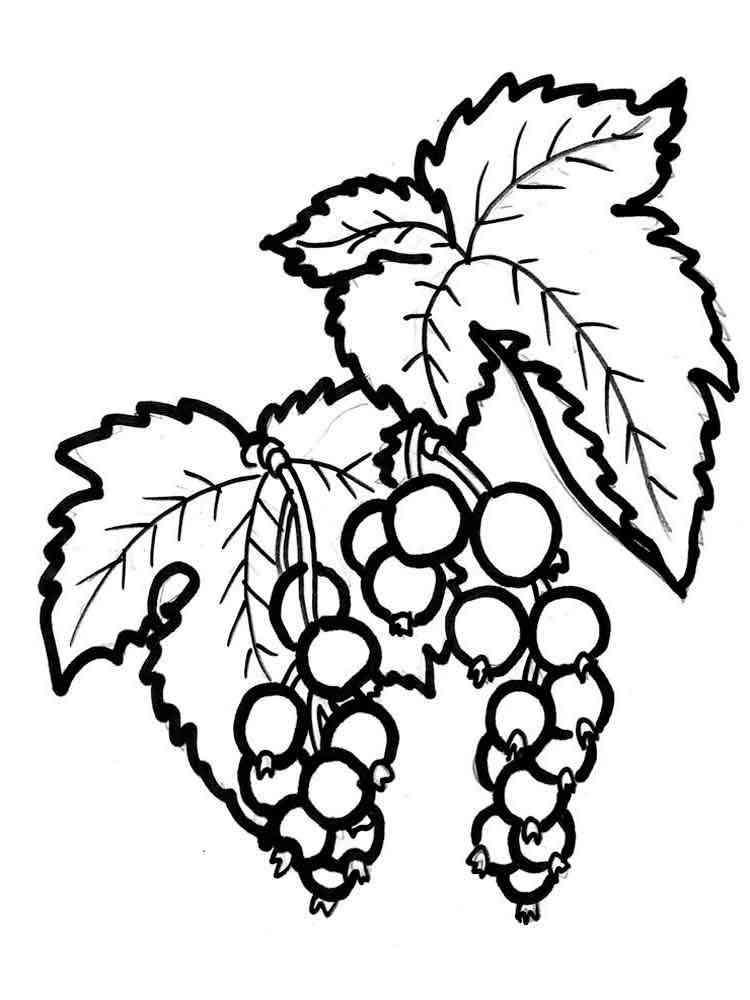 Раскраска Смородина - распечатать в формате А4