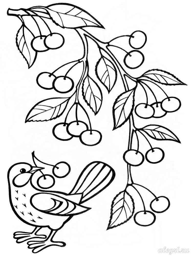 Раскраска Вишня - распечатать в формате А4