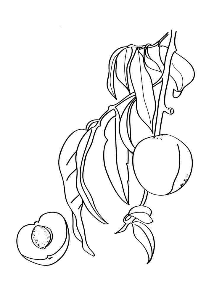 Раскраска Персик - распечатать в формате А4