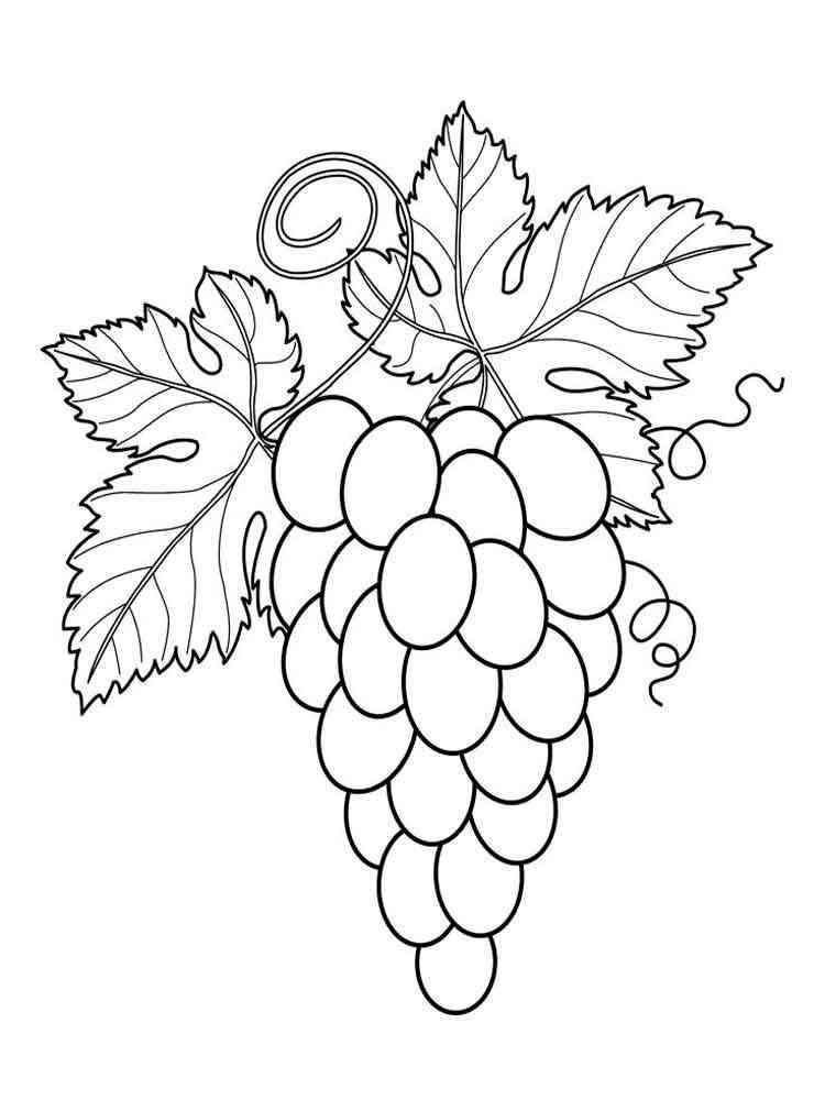 Раскраска Виноград - распечатать в формате А4