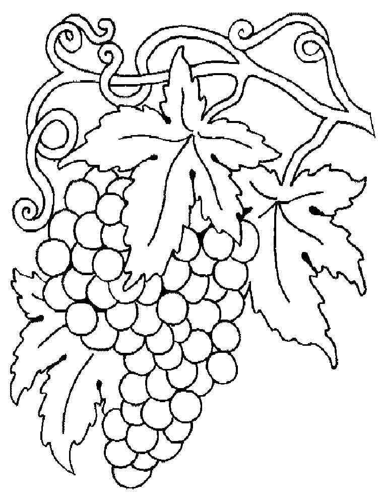 Раскраска цветы фрукты
