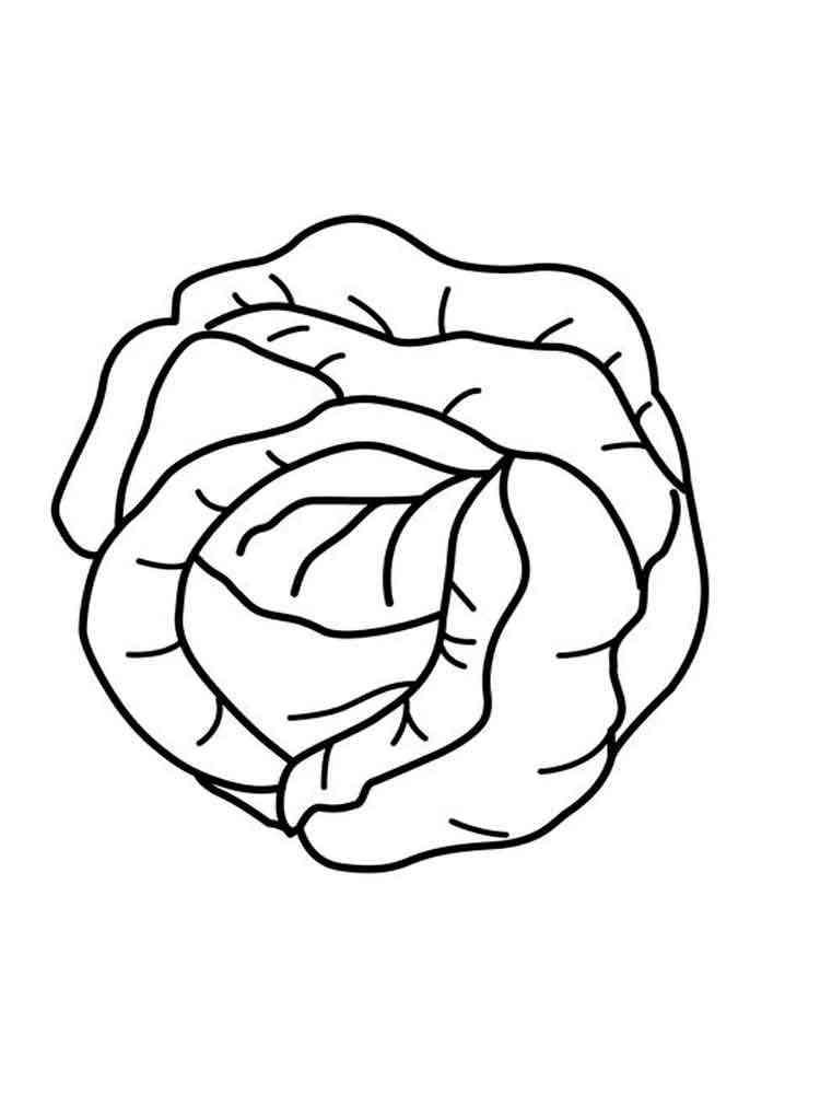 роза капуста рисунки карандашом сюда ездит