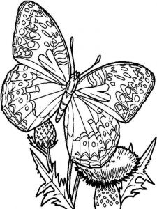 raskraski-animals-butterfly-2