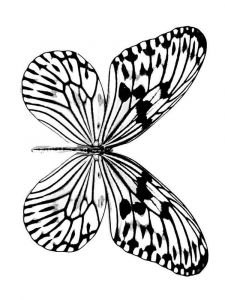 raskraski-animals-butterfly-22
