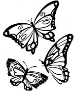 raskraski-animals-butterfly-3