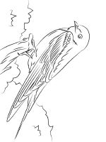 1505129451_barn-swallow-coloring-pages